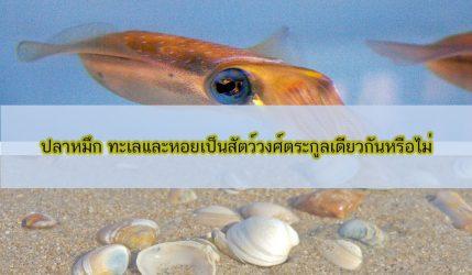 ปลาหมึก ทะเลและหอยเป็นสัตว์วงศ์ตระกูลเดียวกันหรือไม่