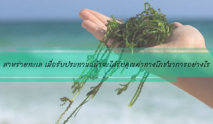 สาหร่ายทะเล เมื่อรับประทานแล้วจะได้รับคุณค่าทางโภชนาการอย่างไร