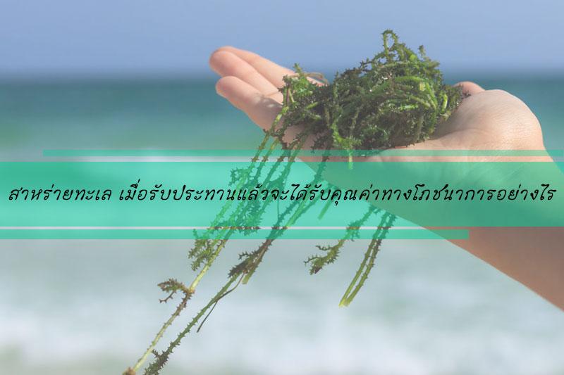 สาหร่ายทะเล