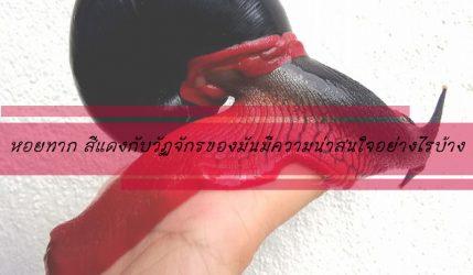 หอยทาก สีแดงกับวัฏจักรของมันมีความน่าสนใจอย่างไรบ้าง
